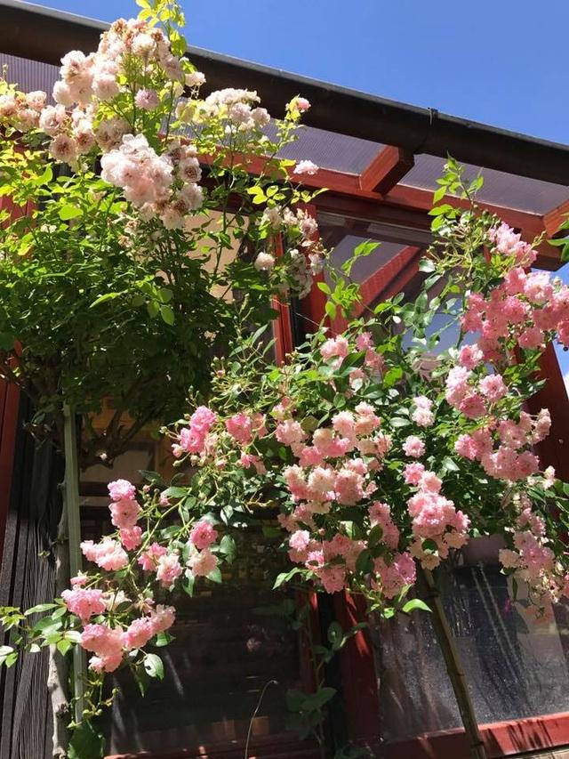 """Ngôi nhà hoa hồng """"đẹp như cổ tích"""" của nữ Việt kiều Hungary - 8"""