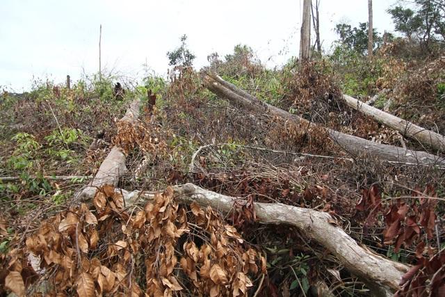Điều tra vụ phá 7ha rừng tự nhiên tại Lâm Đồng - 1