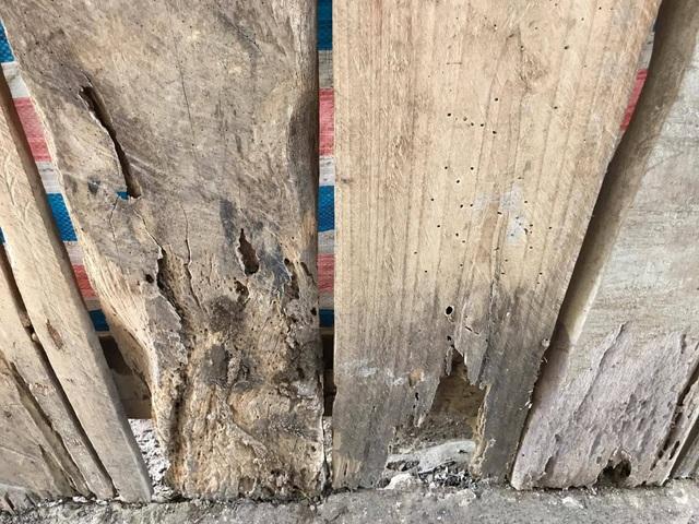 Các tấm ván gỗ theo thời gian đã mục nát, có nguy cơ đổ sập vào lúc mưa to, gió lớn