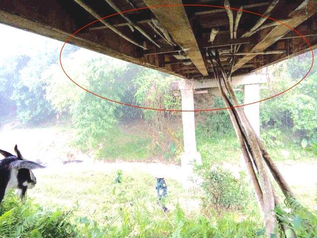 Phía dưới mặt cầu được người dân đưa tre chống để đề phòng những bất trắc xảy ra.