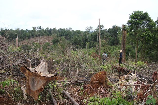 Khoảng 7ha rừng tự nhiên ở Đạ Tẻh, Lâm Đồng bị đốn hạ, gỗ vứt la liệt trên các quả đồi