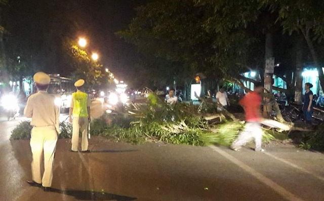 Cây lớn dài tầm 11m đổ chắn ngang đường Phan Đăng Lưu.