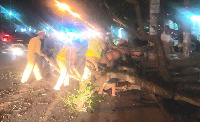 Cây xanh lớn đổ xuống đường Phan Đăng Lưu gây ách tắc cục bộ.