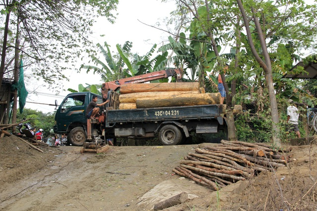 Cơ quan chức năng đưa gỗ về đơn vị để xử lý