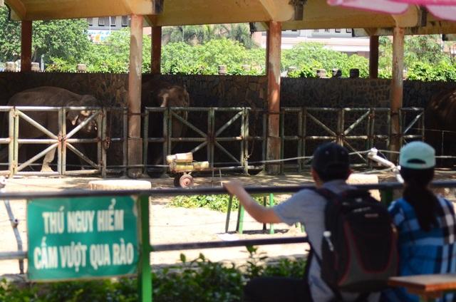 Tại đây có bố trí ghế ngồi cho khách tham quan ngắm voi.