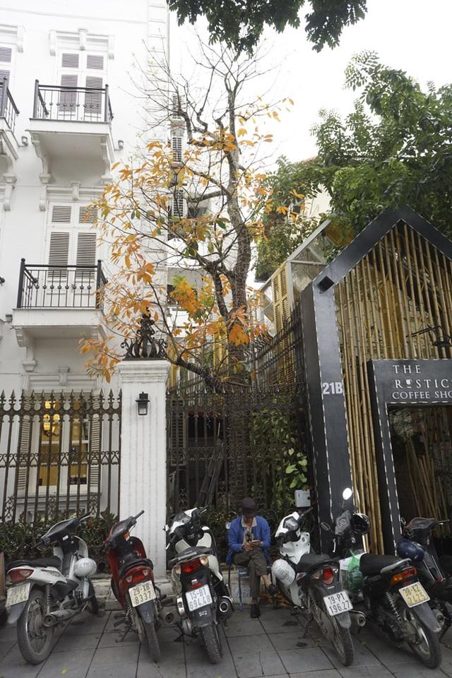 Lộc vừng khoe sắc trong sân một ngôi nhà trên đường Điện Biên Phủ.