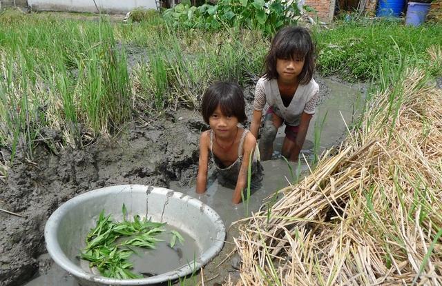 Ở cái tuổi ăn chưa no, lo chưa tới nhưng chị em Son, Phấn sau mỗi buổi học là ra đồng bắt cá, hái rau... lo cái ăn từng bữa