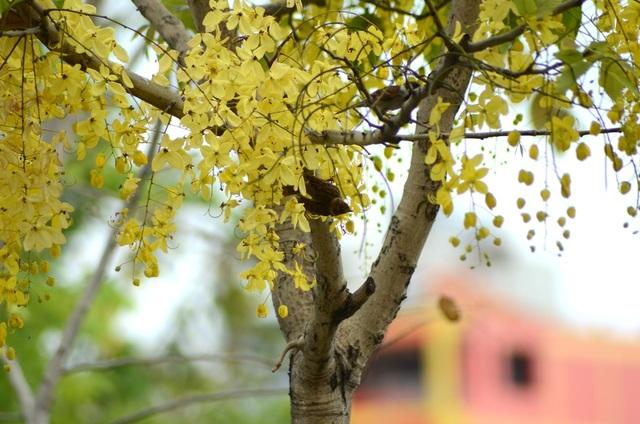 Chim chóc vui đùa bên những cánh hoa vàng rực.