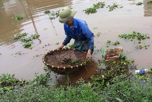 Đi săn cua đồng là nghề truyền thống, cho thu nhập cao đối với nhiều hộ dân ở huyện Kim Sơn, Ninh Bình.