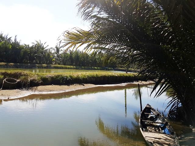 Đào ao nuôi hải sản trong rừng dừa