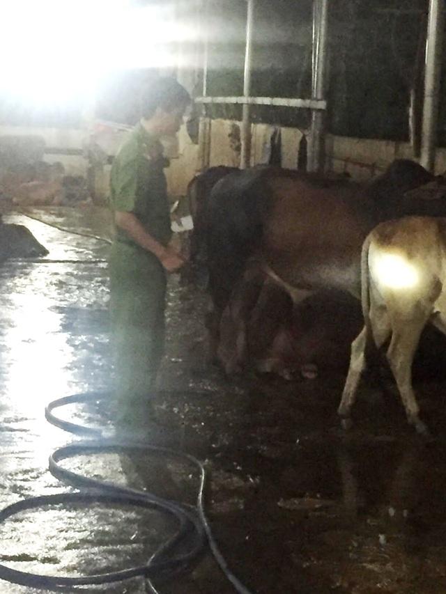 Lực lượng chức năng bắt quả tang chủ bò đang bơm nước. (Ảnh: PC49 Công an Quảng Nam)
