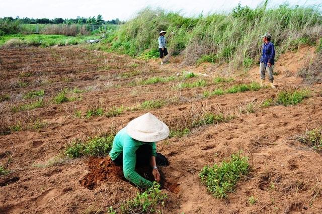 Vào thời điểm săn dế(từ tháng 4 đến tháng 8 âm lịch) đến khu vực Bình Yên An, phường Long Hòa, quận Bình Thủy có hàng chục người đi săn dế cơm