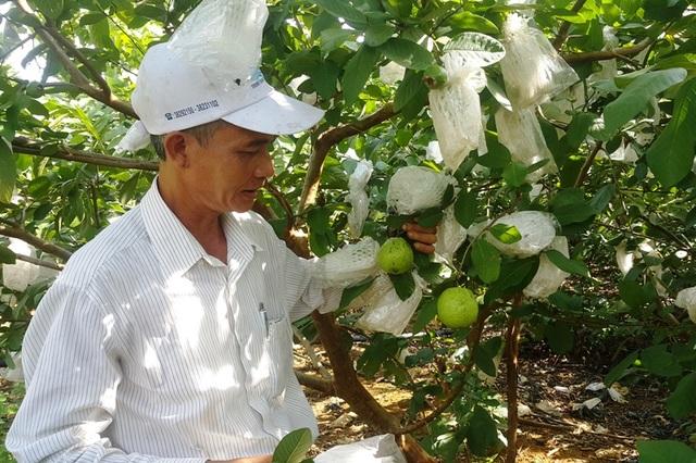 Nhiều loại cây ăn quả được ông Sơn bắt cho ra trái vụ bán với giá cao.