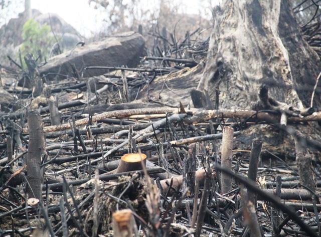 Lãnh đạo Kiểm lâm tỉnh Bình Định cho rằng đây là rừng cây bụi, thực bị chứ không phải rừng