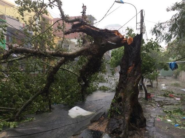 Đường phố ngổn ngang, nhà mất mái khi bão số 12 đổ bộ - 7