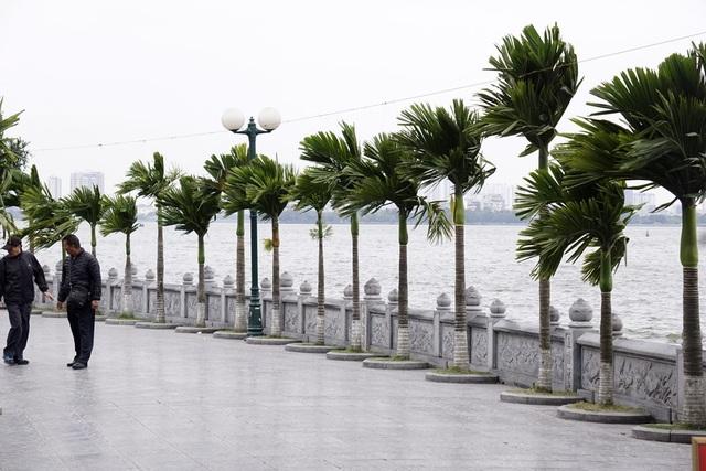 Bên Hồ Tây, gió thổi từng cơn qua hàng cau trên lối đi vào chùa Trấn Quốc.