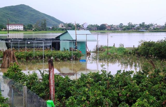 Nước lũ dâng cao, lại nhấn chìm vùng hạ lưu sông Kôn - 5