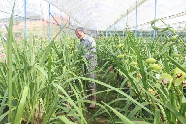 Vườn lan tiền tỷ xanh mướt của lão nông Lê Thanh Hùng ở Xuân Trường, TP Đà Lạt