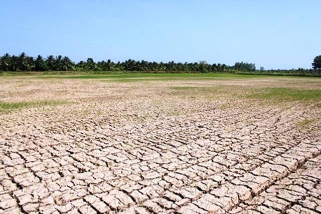 Năm 2017, dự báo nông nghiệp Việt Nam sẽ vẫn phải đổi mặt với nhiều thách thức mới (Ảnh minh họa: Minh Giang).