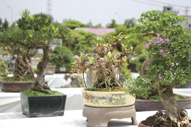 """Bonsai được hiểu là cây được trồng trong chậu nhỏ. Đây là một thú chơi tao nhã, được ví như """"viên ngọc quý"""" trong vườn cảnh. Trước đây, thú chơi bonsai thường chỉ dành cho người lớn tuổi, thế nhưng ngày nay, rất nhiều người với đủ mọi lứa tuổi yêu thích và đam mê môn nghệ thuật độc đáo này."""