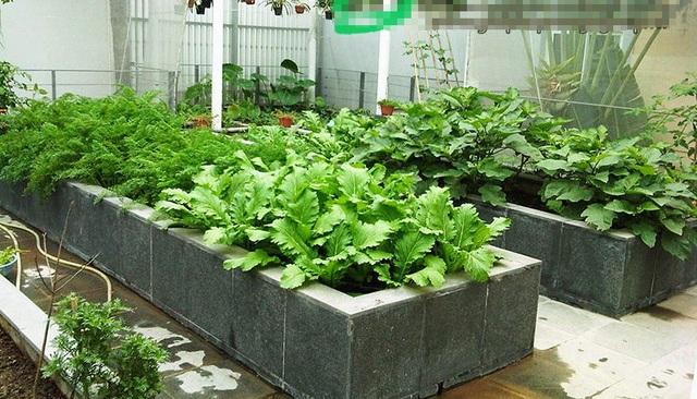 Những vườn rau được xây công phu và tốn kém