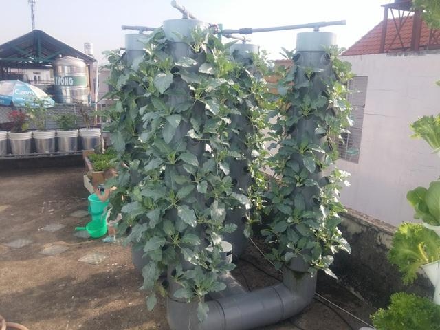 """Trồng 10m2 trên sân  thượng, """"siêu"""" nông dân Sài Gòn thu 50kg rau/vụ - 11"""