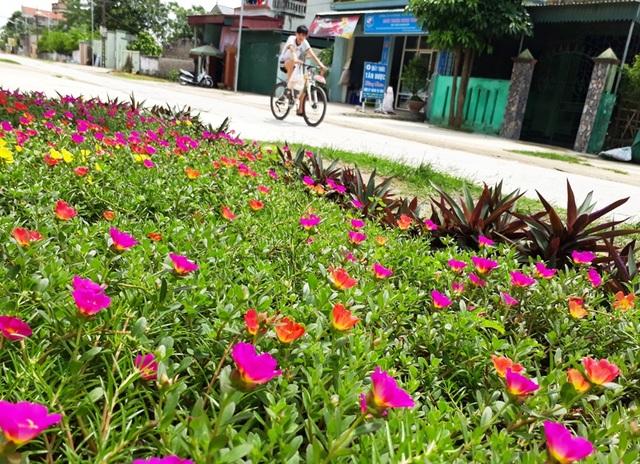 Nhiều thôn trên địa bàn xã Quảng Thái hưởng ứng kế hoạch trồng hoa ven đường