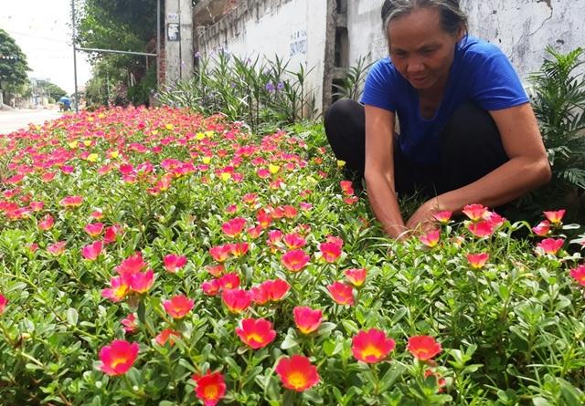 Kế hoạch trồng hoa đã được huyện Quảng Xương triển khai đến các tổ chức cơ sở Hội phụ nữ và nữ công các đơn vị trực thuộc đóng trên địa bàn