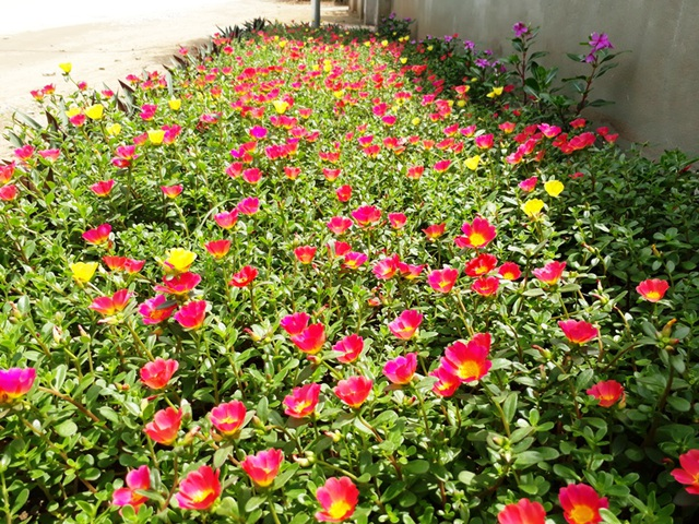 Những con đường rực rỡ sắc hoa nơi miền quê thanh bình - 5