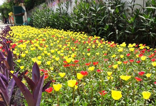 Nhà nhà trồng hoa, người người trồng hoa khắp các đường làng, ngõ xóm