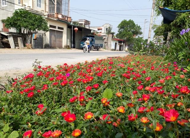 Những cây cỏ dại hai bên đường đã được thay thế bởi hoa, cây cảnh