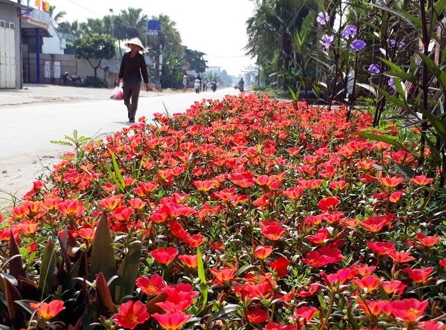 Kế hoạch trồng hoa được 100% cơ sở Hội phụ nữ trên địa bàn hưởng ứng