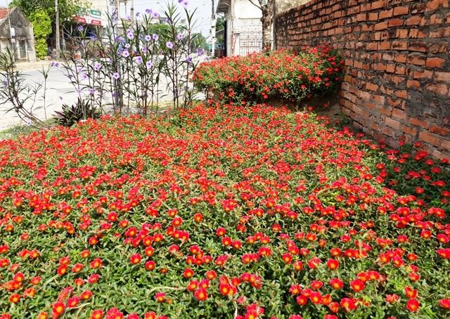Nhờ triển khai kế hoạch, trên các đường làng, ngõ xóm nơi các miền quê Quảng Xương đã dần hình thành những con đường hoa, những bồn hoa khoe sắc, tạo cảnh quan môi trường tươi mới, giàu sức sống
