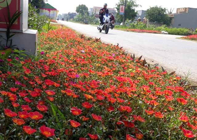 Hoa mười giờ là loại hoa được chọn trồng nhiều nhất