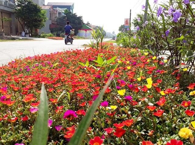 Với trung tâm là hoa mười giờ, ngoài ra các loại hoa, cây cảnh khác còn được trồng xung quanh tạo nên một bức tranh đa sắc màu