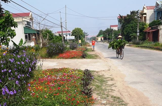 Đã có hàng chục km đường được các địa phương trên địa bàn huyện Quảng Xương trồng hoa, cây cảnh thay thế cỏ dại