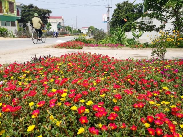 Mô hình trồng hoa, cây cảnh thay cỏ dại ven đường đã trở thành phong trào, thực sự đi vào cuộc sống của người dân
