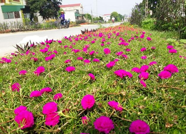 Vào những buổi chiều, đi dạo trên những con đường quê ngập tràn sắc hoa, cho ta những cảm giác thật tuyệt vời