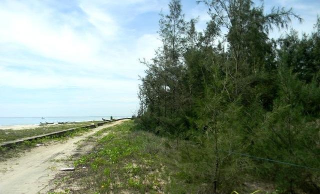 Các lô đất trồng cây lâu năm ven biển Tam Thanh được căng dây là bà V. đã mua.