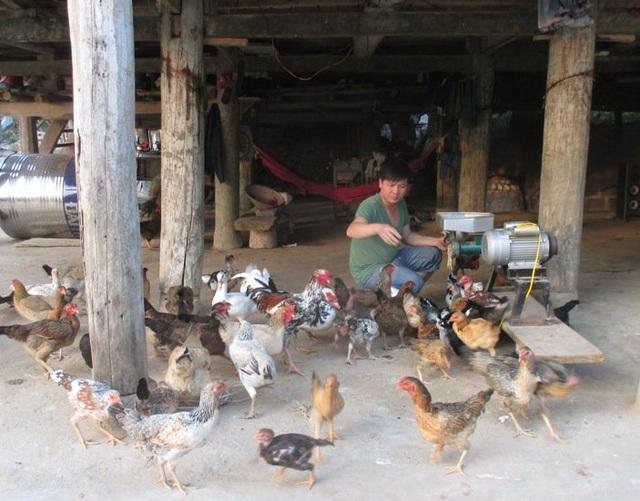 Gà, lợn giun quế: Hàng hiếm một thời tràn ra thị trường với giá rẻ - 1