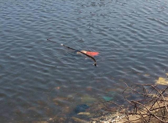 Thi thể người đàn ông nổi trên mặt nước.