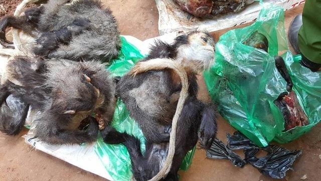 Hơn 100kg cá thể động vật hoang dã được chủ quán nhậu bọc trong các bao tải, túi nilon cất dấu trong tủ lạnh và kho hàng
