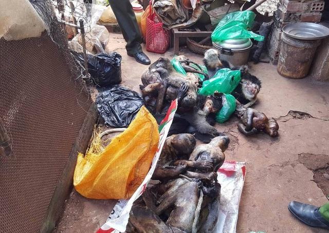 Hơn 16 cá thể chưa xác định được chủng loại nghi là nghi là vọoc và khỉ
