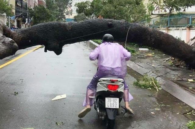 Hàng loạt cây xanh trên đường phố Nha Trang bị gãy đổ, gây khó khăn cho các phương giao thông