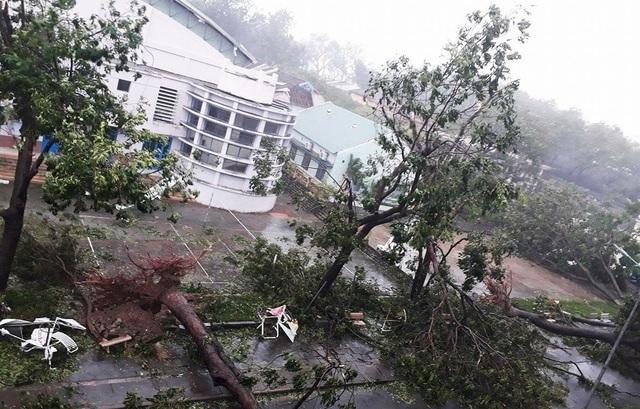 Cây xanh ở khu vực ven biển Nha Trang bị te tua, tơi tả sau bão số 12