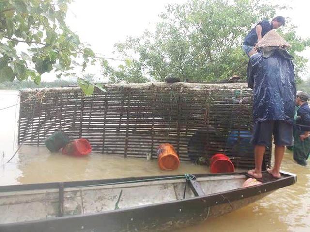 Lồng cá trắm hơn 100 triệu ông Nguyễn Lành được tìm thấy sau khi trôi dạt trong lũ 10 km