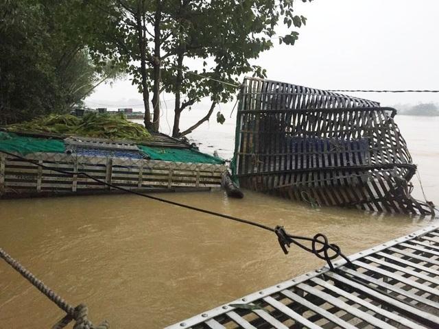 Nhiều lồng cá ở phường Hương Xuân bị lũ làm hư hại