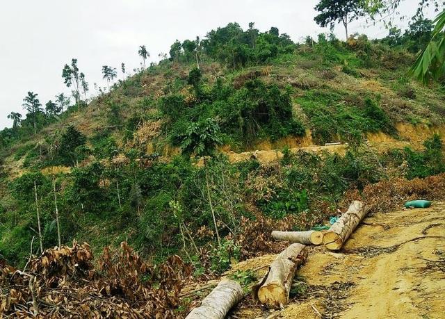 Khu vực rừng chuyển đổi