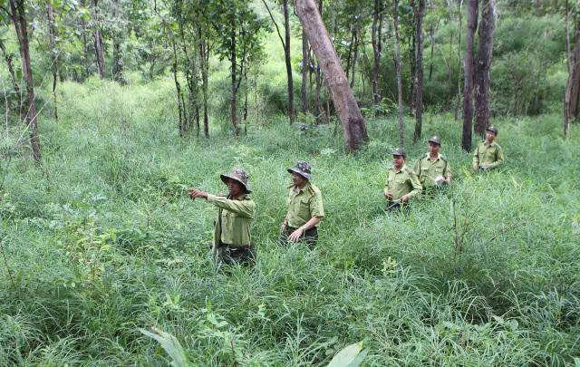 Phụ cấp cho lực lượng kiểm lâm tại Đắk Lắk được chi trả vượt mức quy định (ảnh minh họa)