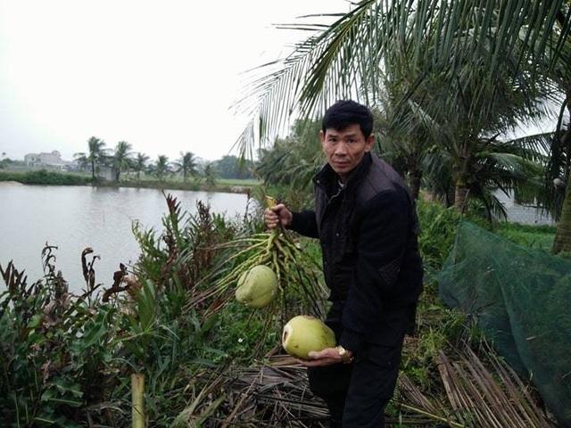 Ngoài gần 20 cây chuối bị chặt phá hết, ông Đa còn phá hoại những cây dừa mà gia đình ông Thế Anh đã trồng cả chục năm
